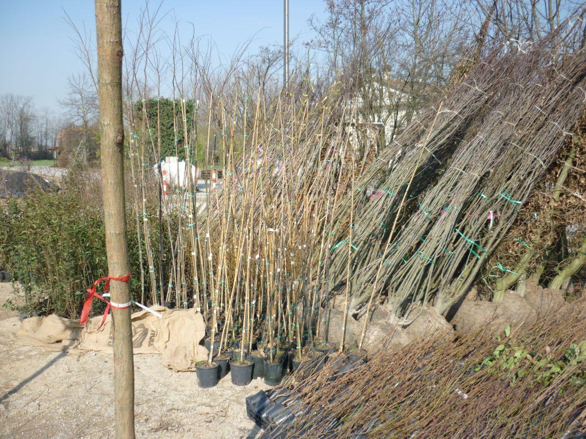 La costruzione del nostro vivaio parte dall'acquisto delle piante da mettere a dimora